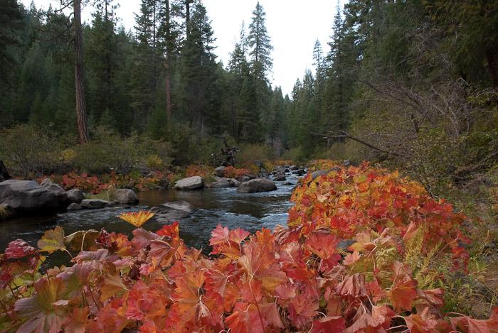 Fall Colors along Deer Creek, Plumas County, California