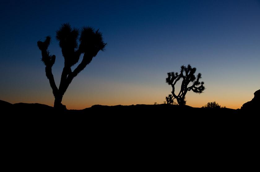 Sunrise over Joshua Tree National Park