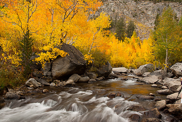 Fall Colors on Bishop Creek, North Fork