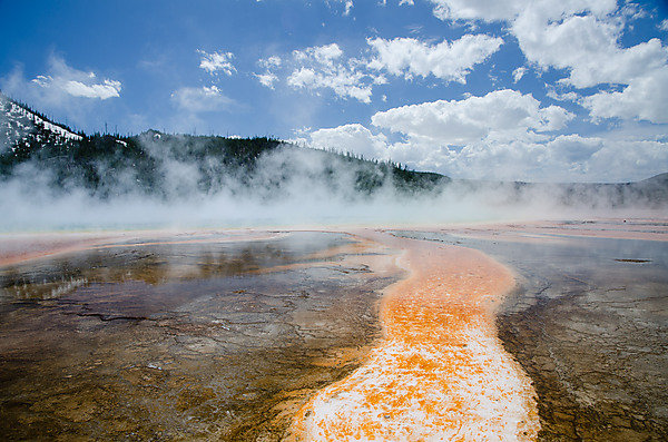 Algae Mat in Thermal Runoff, Midway Geyser Basin