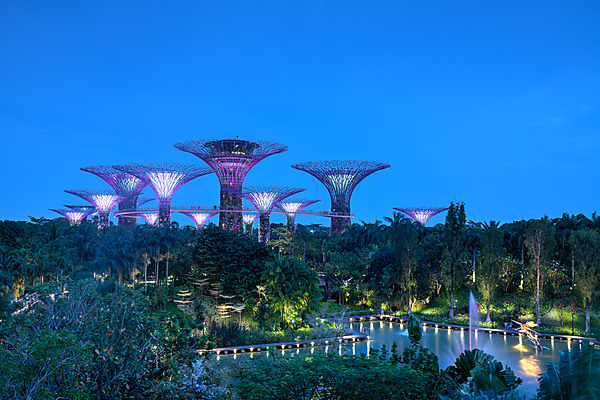 Dusk at Supertree Grove, Gardens by the Bay